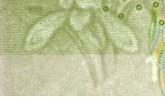 2019年第五套人民币1元花卉变化细节 附高清图片详解