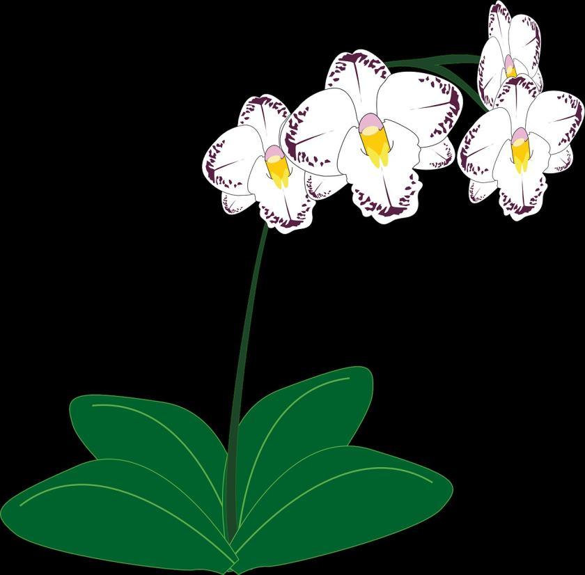 国画兰花的绘画技巧   绘画国画兰花如何选择颜料