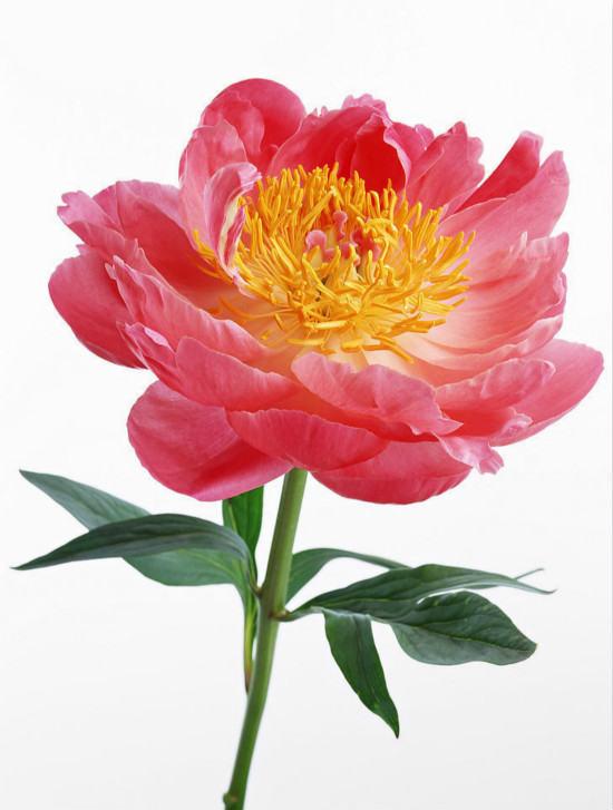 学国画菊花需要做什么准备工作    绘画国画菊花的技巧