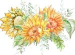 国画菊花怎么画    国画菊花的绘画技巧