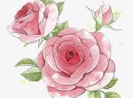 初学者怎么学画牡丹   国画牡丹的画法技巧