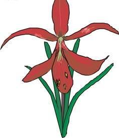 学国画有什么好处    国画兰花的画法