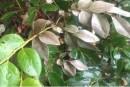小叶紫檀光剩杆能活吗 要怎么养