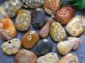 珊瑚玉贴身佩戴的好处 珊瑚玉老料和新料有啥区别