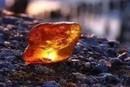 琥珀石是什么东西 琥珀石是怎么形成的