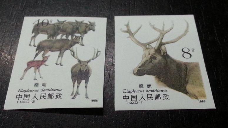 T132麋鹿邮票 T132麋鹿邮票无齿票真伪鉴别