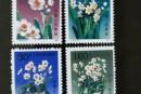 T147水仙花郵票 單枚價格及圖片大全