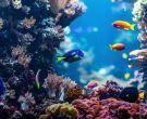 珊瑚礁图片 珊瑚礁是怎么形成的