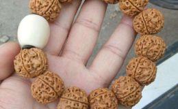 5瓣金剛菩提子手串寓意   其他瓣數的寓意