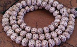 星月菩提元宝籽是什么意思 星月菩提元宝籽图片