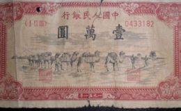 1954年一万元骆驼价格 最近的市场行情怎么样