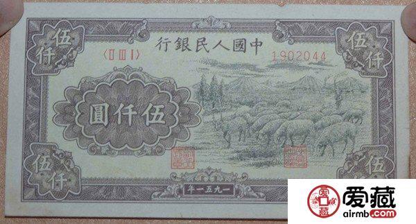 51年5000元牧羊价值浅谈