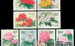 T162 杜鵑花收藏介紹