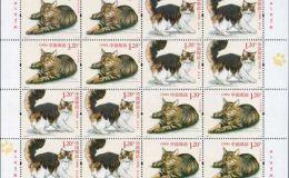 2013-17 猫 大版介绍四种不同种类的猫