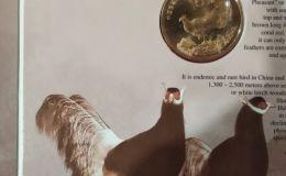 褐马鸡康银阁卡币鉴赏