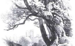 中国山水画的基本画法之画树法