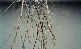 剪:浅析林天苗的装置作品