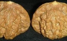 核桃黄尖处理小窍门  核桃黄尖是什么