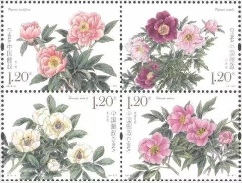 新邮背景:《芍药》特种邮票
