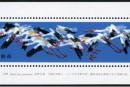 T110M 白鹤(小型张)邮票