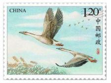 《大雁》特種郵票即將發行