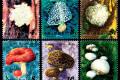 T66 《食用菌》特种邮票